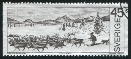 herdsman: SWEDEN - CIRCA 1970: stamp printed by Sweden, shows Reindeer herd and herdsman, circa 1970