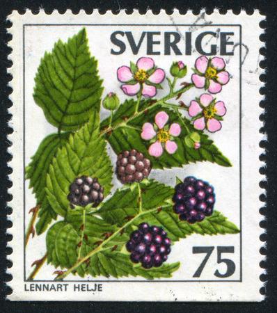 SWEDEN - CIRCA 1977: stamp printed by Sweden, shows Blackberry, circa 1977