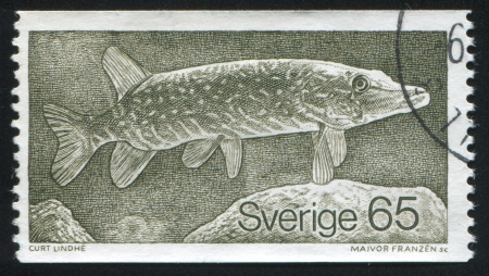 shrouds: SWEDEN - CIRCA 1979: stamp printed by Sweden, shows Pike, circa 1979