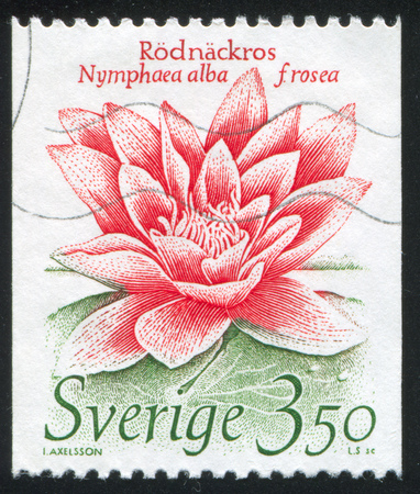 SWEDEN - CIRCA 1985: stamp printed by Sweden, shows European White Waterlily, circa 1985