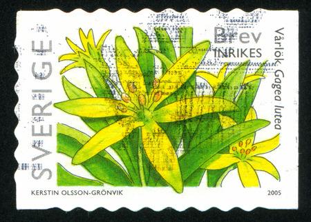 frondage: SWEDEN - CIRCA 2005: stamp printed by Sweden, shows Gagea lutea, circa 2005