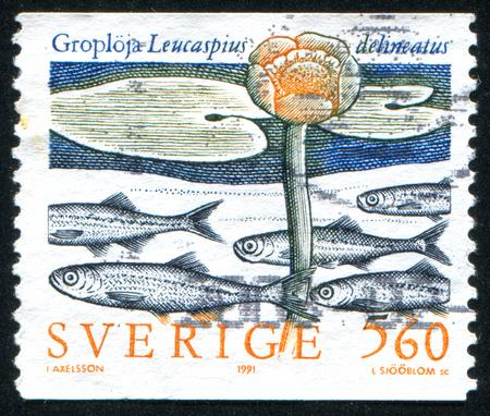SWEDEN - CIRCA 1991: stamp printed by Sweden, shows belica, circa 1991 Stock Photo - 25053865