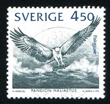 osprey: SWEDEN - CIRCA 1992: stamp printed by Sweden, shows Osprey, circa 1992