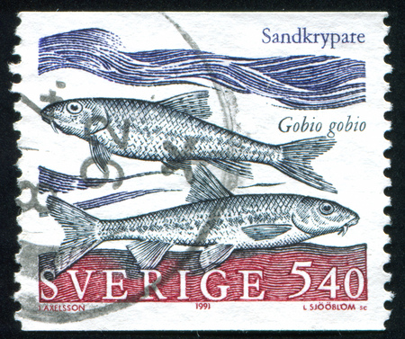 SWEDEN - CIRCA 1991: stamp printed by Sweden, shows gudgeon, circa 1991 Stock Photo - 25054325