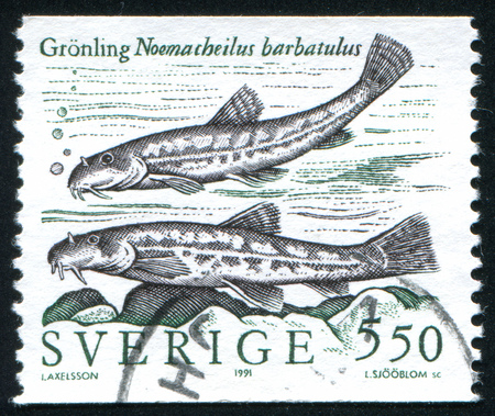 SWEDEN - CIRCA 1991: stamp printed by Sweden, shows Stone loach, circa 1991 Stock Photo - 25054326