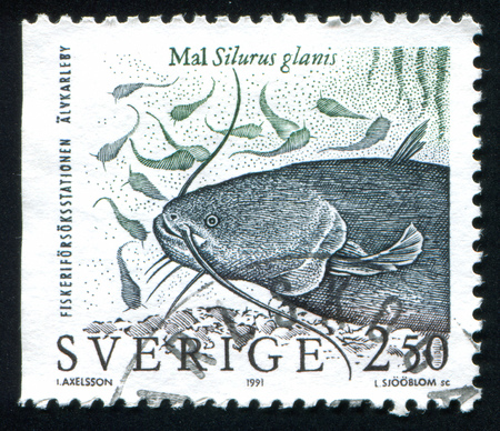 SWEDEN - CIRCA 1991: stamp printed by Sweden, shows Wels catfish, circa 1991 Stock Photo - 25054328