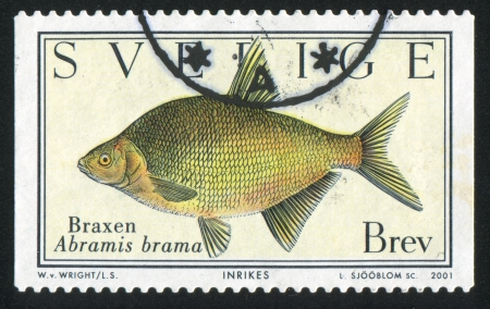 abramis: SWEDEN - CIRCA 2001: stamp printed by Sweden, shows Fish Abramis brama, circa 2001