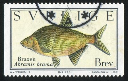 abramis: SWEDEN - CIRCA 2001: stamp printed by Sweden, shows Fish Abramis brama, circa 2001