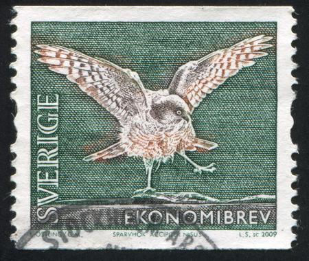 sparrowhawk: SWEDEN - CIRCA 2009: stamp printed by Sweden, shows Eurasian Sparrowhawk, circa 2009