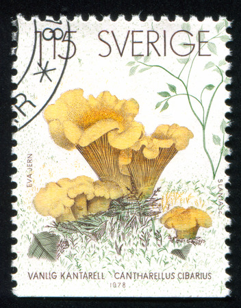 SWEDEN - CIRCA 1978: stamp printed by Sweden, shows mushroom, circa 1978