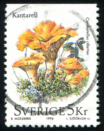 SWEDEN - CIRCA 1996: stamp printed by Sweden, shows mushroom, circa 1996