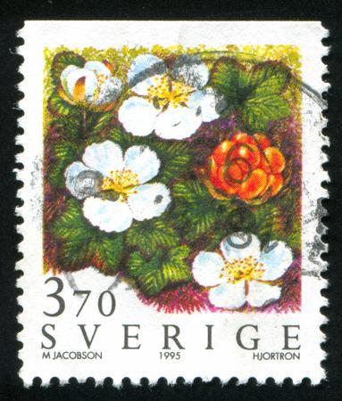 chicout�: SU�DE - CIRCA 1995: timbre, imprim� par la Su�de, montre chicout�, circa 1995