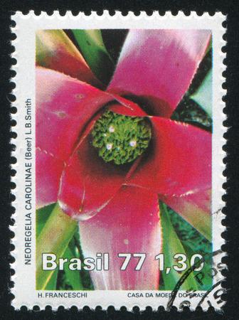neoregelia: BRAZIL - CIRCA 1977: stamp printed by Brazil, shows  flower Neoregelia Carolinae, circa 1977