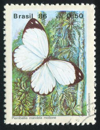 BRAZIL - CIRCA 1986: stamp printed by Brazil, shows butterfly Pierriballia mandel molione, circa 1986 Editorial