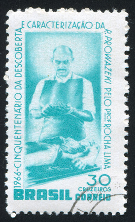 cadaver: BRAZIL - CIRCA 1966: stamp printed by Brazil, shows Rocha Dissecting Cadaver, circa 1966