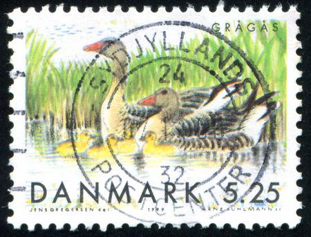 lag: DENMARK - CIRCA 1999: stamp printed by Denmark, shows Gray lag geese, circa 1999