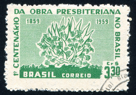 burning bush: BRAZIL - CIRCA 1959: stamp printed by Brazil, shows  Burning Bush, circa 1959