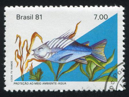 ichthyology: BRAZIL - CIRCA 1981: stamp printed by Brazil, shows  fish and algae, circa 1981