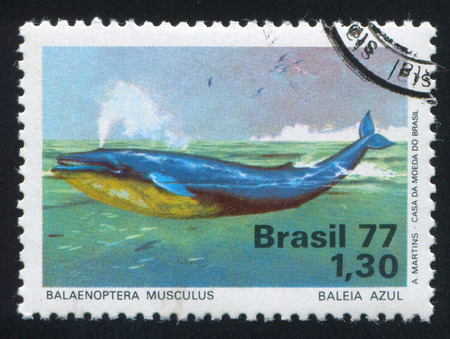 baleen whale: BRAZIL - CIRCA 1977: stamp printed by Brazil, shows  Blue Whale, circa 1977 Editorial