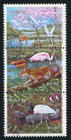 BRAZIL - CIRCA 1984: stamp printed by Brazil, shows  Matto Grosso Lowland Lowland Fauna, circa 1984 Editorial