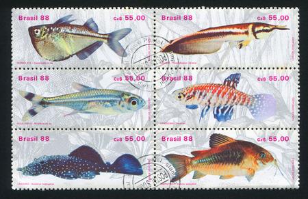 ichthyology: BRAZIL - CIRCA 1988: stamp printed by Brazil, shows  Fresh-water Fish, circa 1988