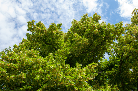 warm weather: Green tree in the forest. Summer warm weather. Stock Photo