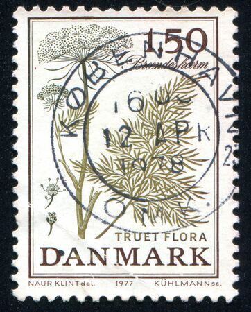 dubium: DENMARK - CIRCA 1977: stamp printed by Denmark, shows Cnidium dubium, circa 1977