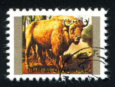 umm: UMM AL-QUWAIN - CIRCA 1972: stamp printed by Umm al-Quwain, shows wild bison, circa 1972