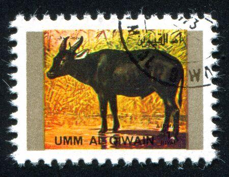umm: UMM AL-QUWAIN - CIRCA 1972: stamp printed by Umm al-Quwain, shows buffalo, circa 1972