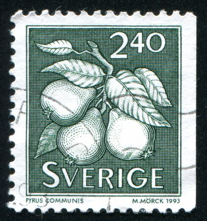 pyrus: SWEDEN - CIRCA 1993: stamp printed by Sweden, shows Pyrus communis pear, circa 1993