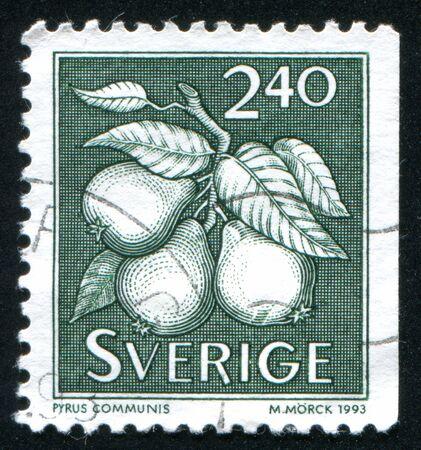communis: SWEDEN - CIRCA 1993: stamp printed by Sweden, shows Pyrus communis pear, circa 1993