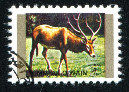 umm: UMM AL-QUWAIN - CIRCA 1972: stamp printed by Umm al-Quwain, shows wild deer, circa 1972