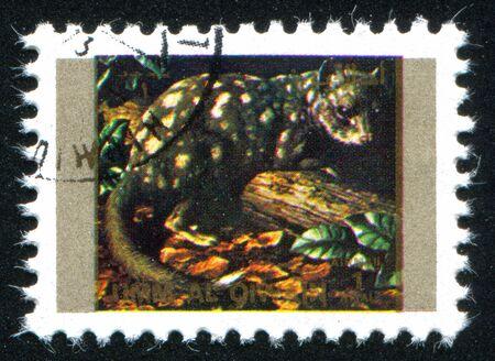 umm: UMM AL-QUWAIN - CIRCA 1972: stamp printed by Umm al-Quwain, shows  wild quoll, circa 1972 Editorial