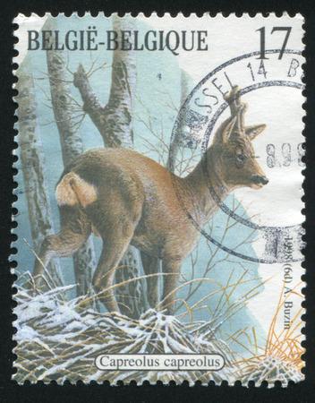 capreolus: RUSSIA KALININGRAD, 26 OCTOBER 2015: stamp printed by Belgium, shows Capreolus capreolus, circa 1998