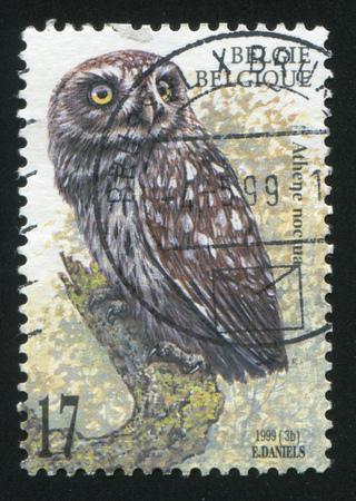 athene: RUSSIA KALININGRAD, 26 OCTOBER 2015: stamp printed by Belgium, shows Athene noctua, circa 1999 Editorial