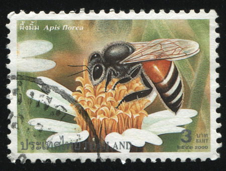 timbre postal: Rusia Kaliningrado, 3 JUNE 2016: sello impreso por Tailandia muestra abeja, alrededor del año 2000