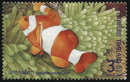 ichthyology: RUSSIA KALININGRAD, 30 MAY 2016: stamp printed by Thailand shows fish, circa 2006 Editorial