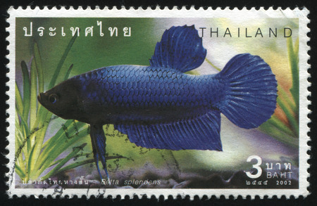 ichthyology: RUSSIA KALININGRAD, 31 MAY 2016: stamp printed by Thailand shows fish, circa 2002 Editorial