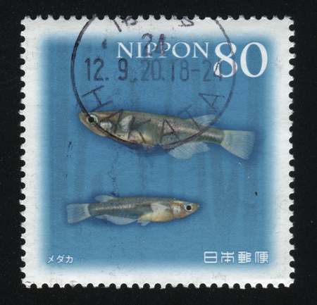 RUSSIA KALININGRAD, 18 MARCH 2016: stamp printed by Japan shows fish, circa 2007
