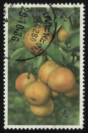 nourishing: RUSSIA KALININGRAD, 2 JUNE 2016: stamp printed by Thailand, shows tangerines, circa 1993