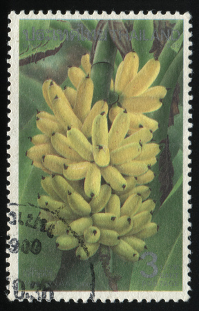 nourishing: RUSSIA KALININGRAD, 2 JUNE 2016: stamp printed by Thailand, shows bananas, circa 1993 Editorial