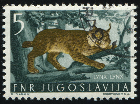 postmark: RUSSIA KALININGRAD, 12 NOVEMBER 2016: stamp printed by Yugoslavia, shows Lynx, circa 1954
