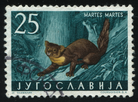러시아 칼리닌그라드, 2011 년 11 월 12 일 : 우표 인쇄 유고 슬라비아, 쇼 소나무 마 룬, 1960 년경