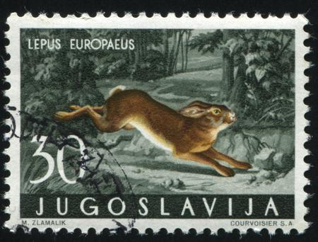 러시아 칼리닌그라드, 2011 년 11 월 12 일 : 우표 인쇄 유고 슬라비아, 보여줍니다 토끼, 1960 년경