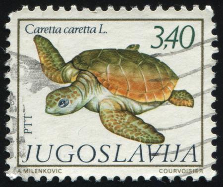 RUSSIA KALININGRAD, 12 NOVEMBER 2016: stamp printed by Yugoslavia, shows a Turtle, circa 1962 Editöryel