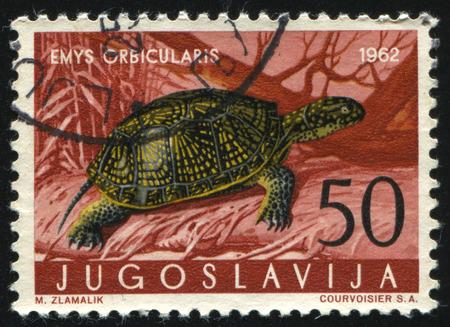 RUSSIA KALININGRAD, 12 NOVEMBER 2016: stamp printed by Yugoslavia, shows Pond Turtle, circa 1962