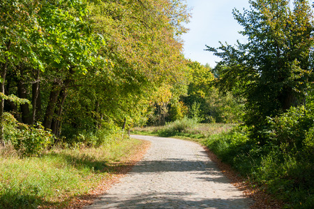 Road in forest in autumn. Autumn scene with road in forest.