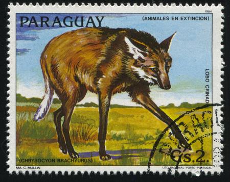 러시아 칼리닌그라드, 22 4 월 2017 : 파라과이, 쇼 chrysocyon brachyurus에 의해 인쇄 된 스탬프 1984 년경