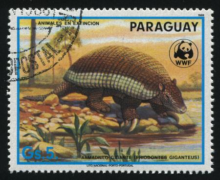 러시아 칼리닌그라드, 2017 년경 : 파라과이, 쇼 priodontes giganteus 또는 거 대 한 딜에 의해 인쇄 된 스탬프 2017 년경 물에 의해 1988 년경