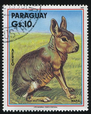 러시아 칼리닌그라드, 2017 년 4 월 22 일 : 스탬프 파라과이, 쇼 마라, 1989 년경에 의해 인쇄 스톡 콘텐츠 - 86775823